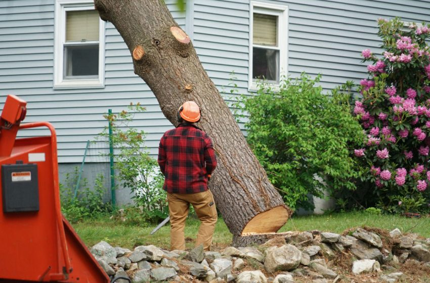 Choosing the Best Tree Service Provide; Top Considerations