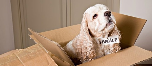 Know-How's In The Moving Process: What To Do When You Have A Pet?