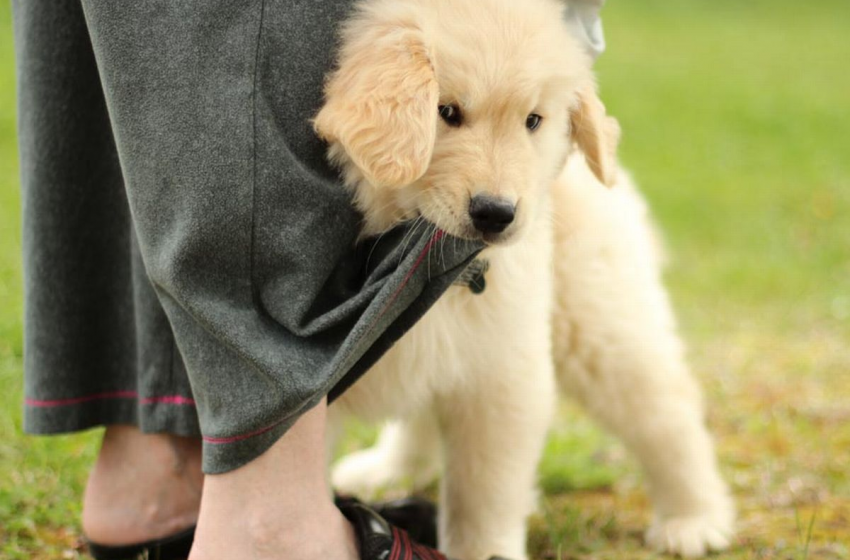5 Things You Didn't Know About Dog Training School