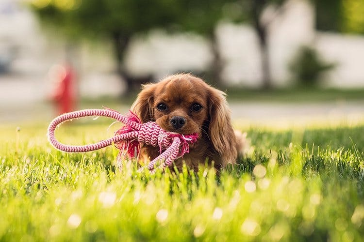 Pet Online Store – A Complete Store For Your Pet