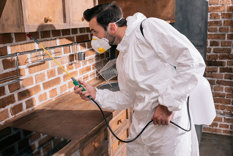 Why Professional Pest Control Services are Better Than DIY Alternatives?