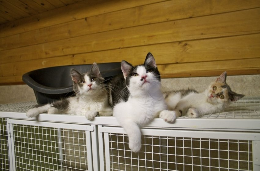 Keep Your Cats Safe With An Outdoor Cat Enclosure