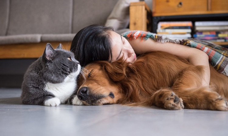 Pet leads a very happy and healthier life