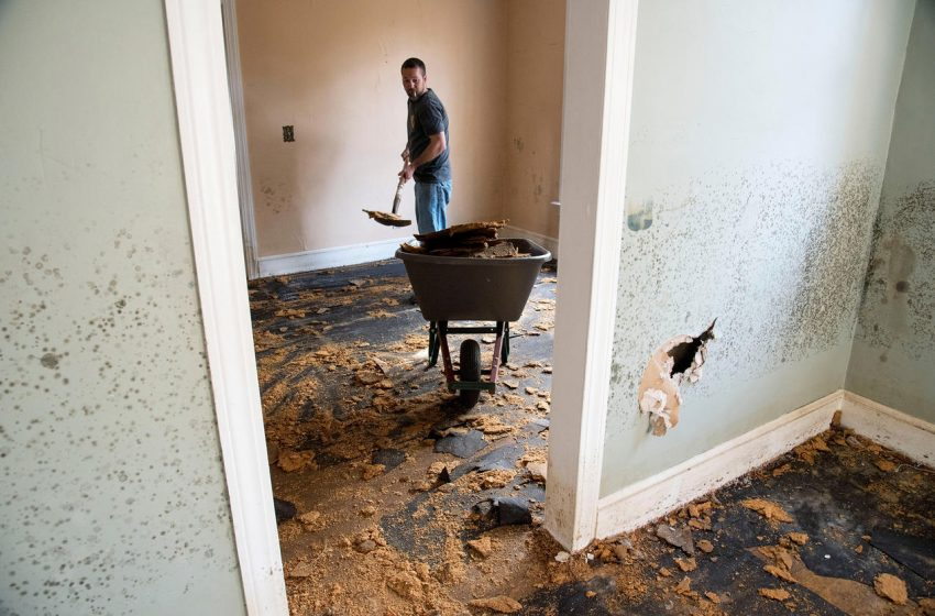 Reasons why you need a professional flood cleaning services