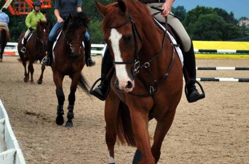 5 Ways To Mitigate Your Horse Business Risks