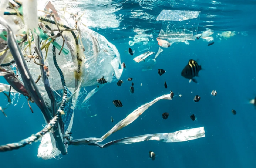 What is Plastic Free July and why is it important?