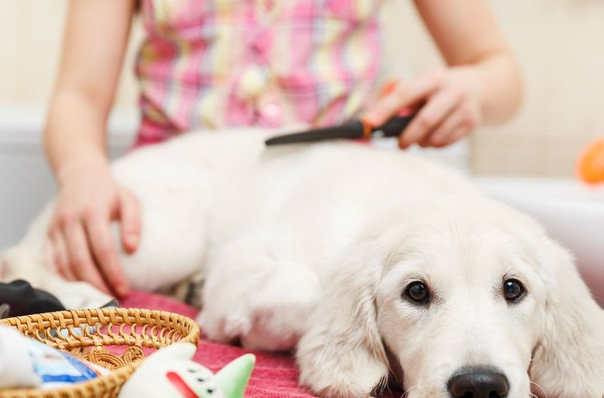 18 Pet Business Ideas for Animal Lovers