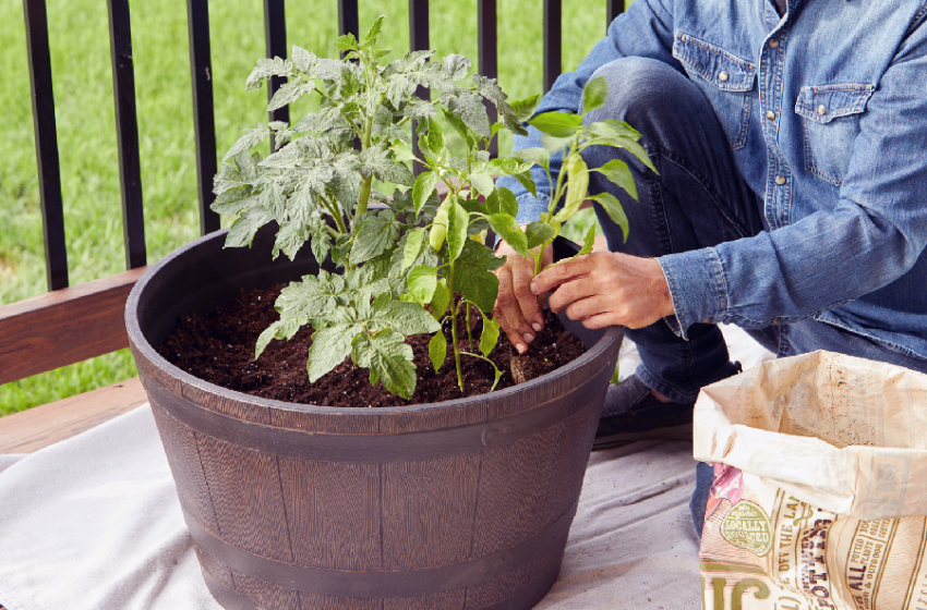 What to Know About Types of Growing Containers